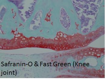 Safranin-O & Fast Green