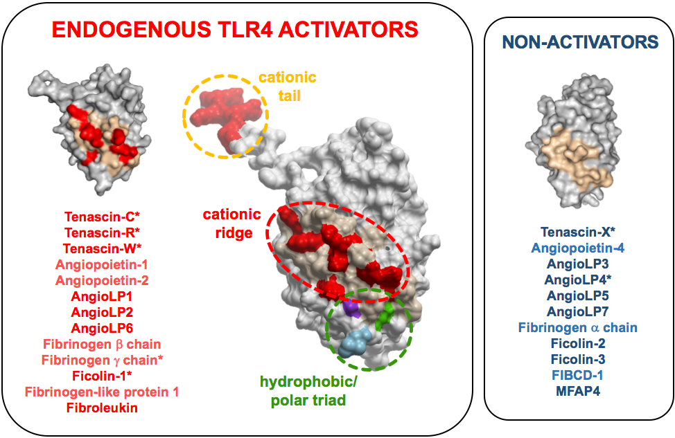 Endogenous-tlr4-activators.png