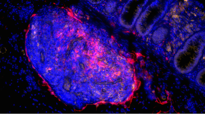Stromal Cell Biology