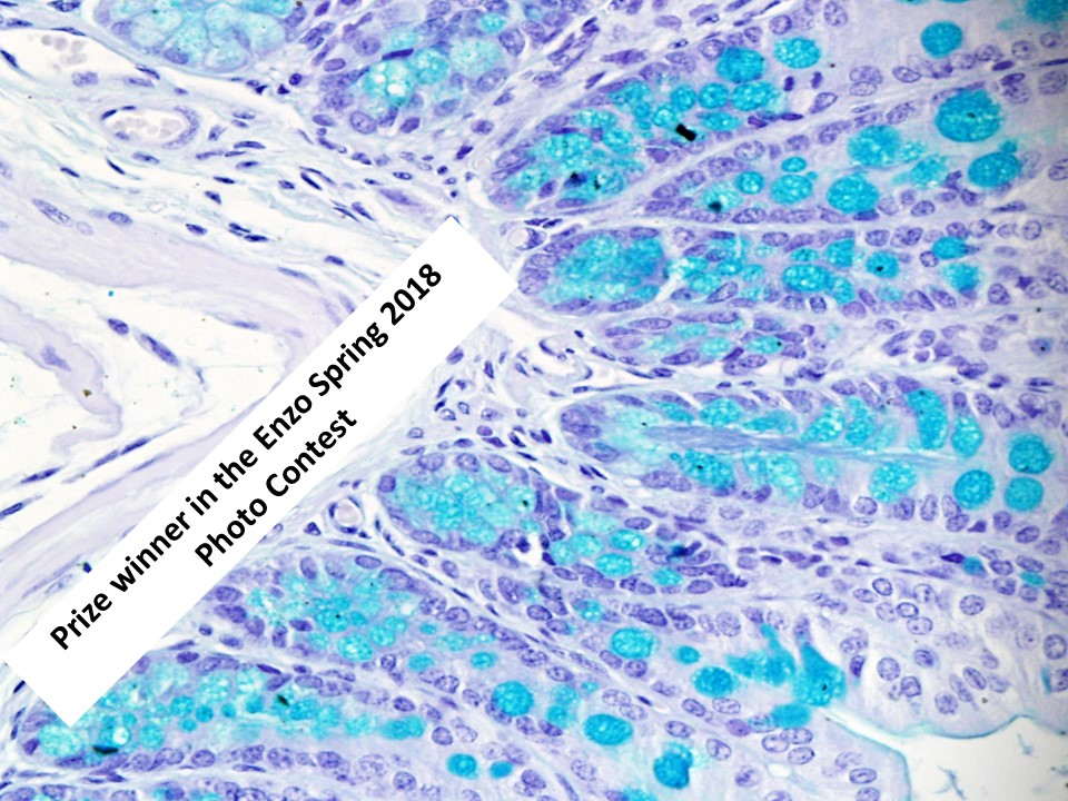 Image Competition Prize 3